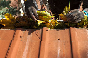 Local Gutter Cleaning Newcastle-under-Lyme